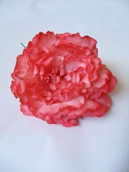 N Peonia coral78