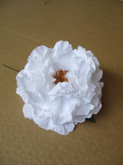 N Nueva Peonia blanco1